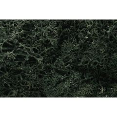 Lichen Woodland scenics dark Green L164